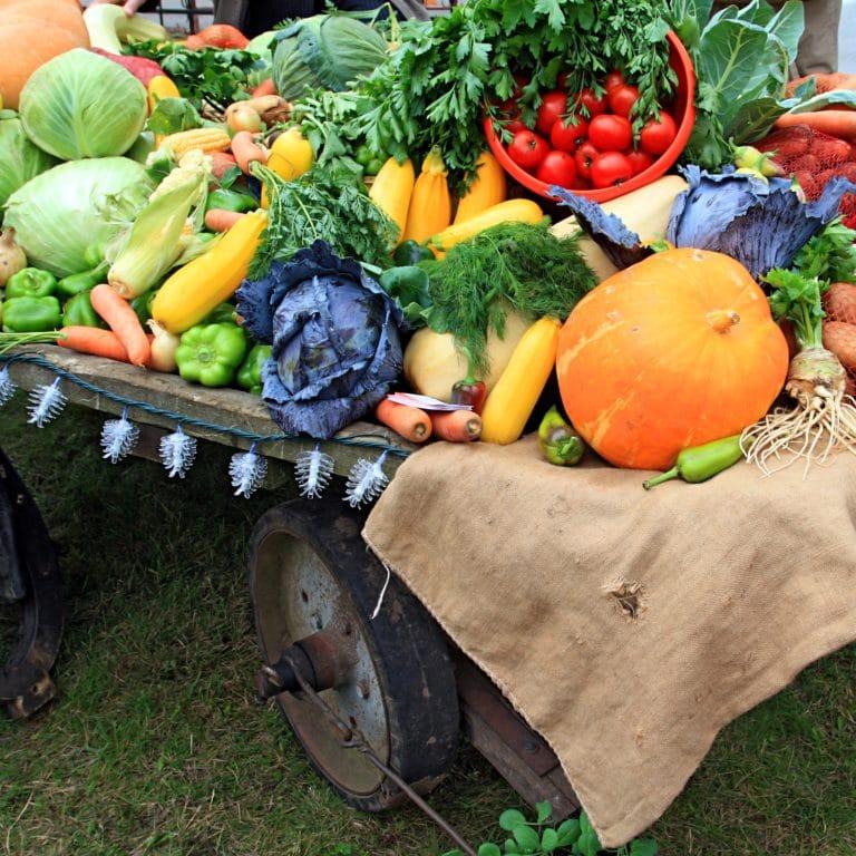 légumes d'automne - Corps et Santé