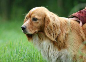 Les bienfaits de promener son chien - Corps et Santé