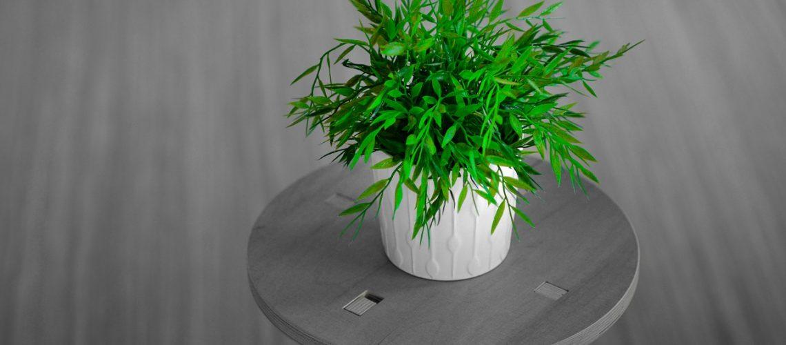 Plante verte à la maison - Corps et Santé