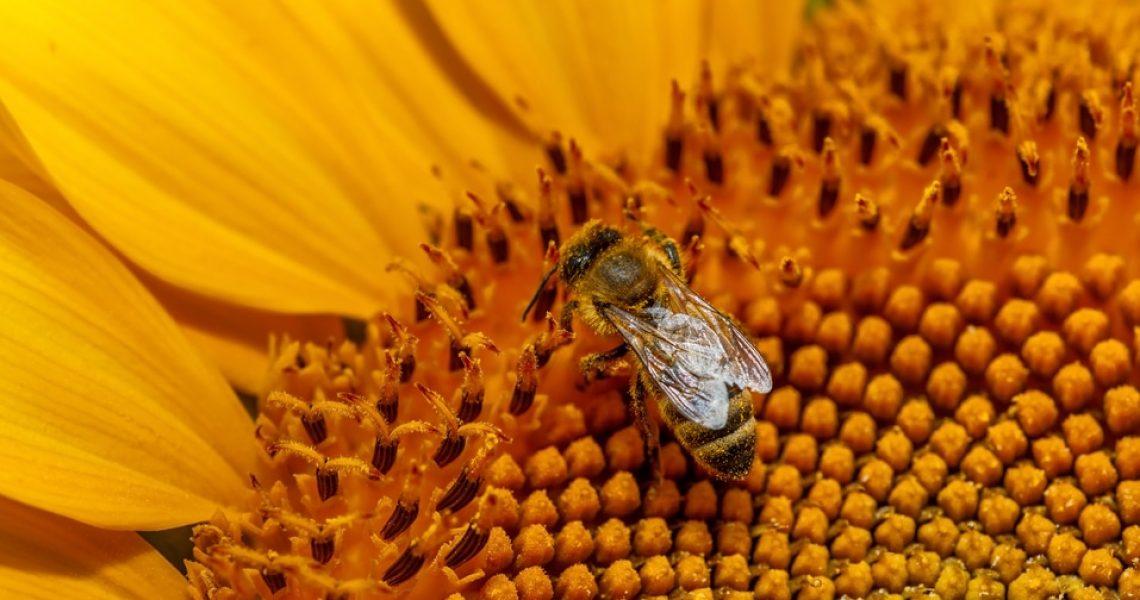 Pollen Frais - Corps et Santé
